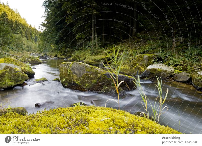 At the river Environment Nature Landscape Water Sky Horizon Autumn Weather Beautiful weather Plant Tree Grass Bushes Moss Forest Rock Waves River bank Austria