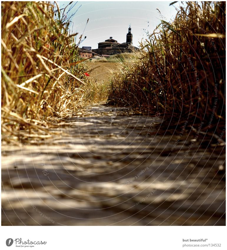 Summer Warmth Field Perspective Lanes & trails Physics Spain Footpath Cornfield Navarra