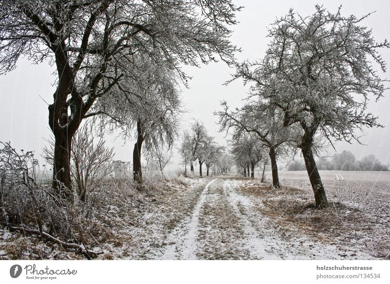 Tree Winter Calm Far-off places Cold Snow Lanes & trails Landscape Brown Field Empty Peace Footpath Dreary Hoar frost Franconia