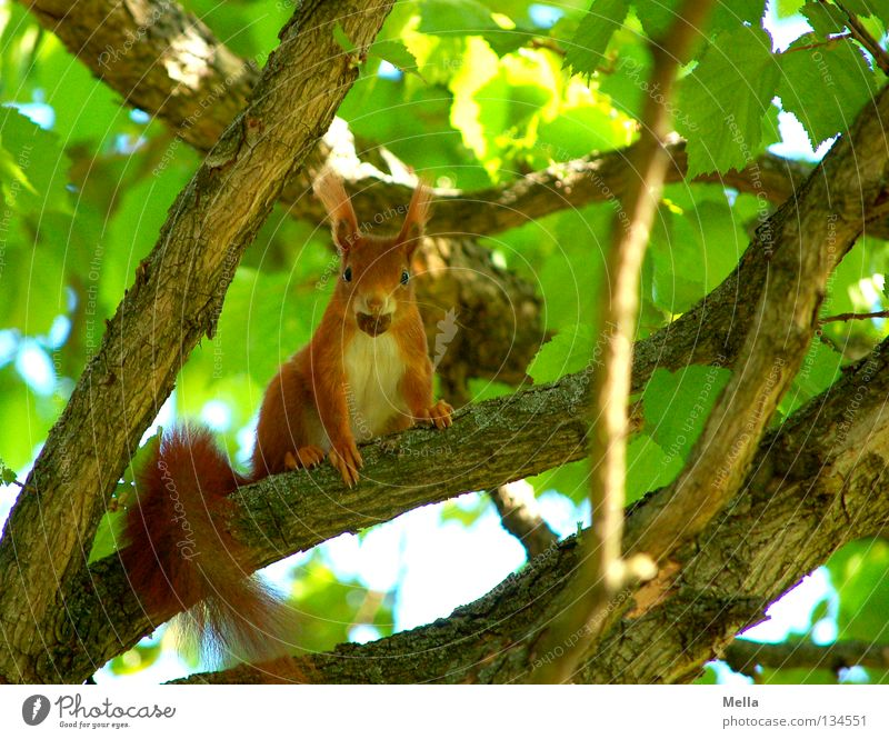Nature Tree Green Plant Leaf Animal Spring Environment Sit Observe Natural Curiosity To hold on Wild animal Cute To feed