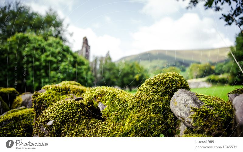 Nature Old Plant Green Landscape Environment Wall (building) Architecture Meadow Grass Wall (barrier) Stone Beautiful weather Historic Moss Ruin