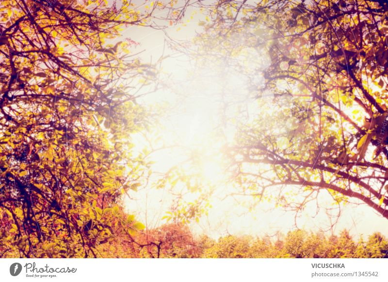 Nature Plant Tree Leaf Yellow Autumn Background picture Garden Park Design Branch Beautiful weather Autumn leaves Autumnal Autumnal colours Twigs and branches