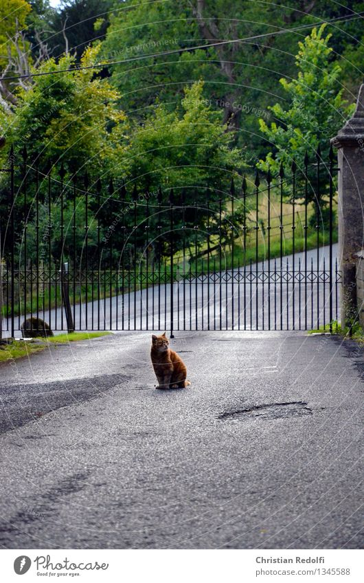 Cat Landscape Animal Garden Park Door Sit Places Grief Might Asphalt Monument Gate Ruin Highway ramp (entrance) Garden door