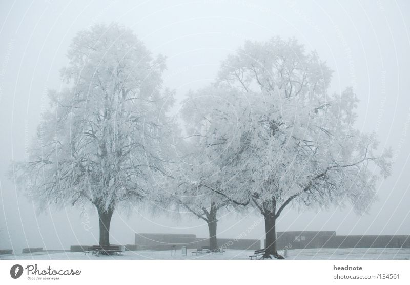 White Tree Winter Cold Snow Fog Places Gloomy Frost Bench Branch Bucket
