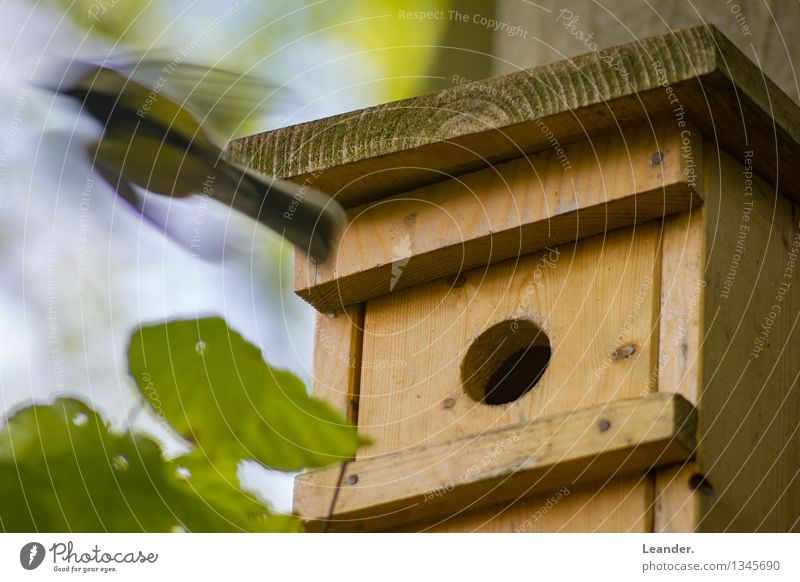 Nature Green Summer Animal Spring Movement Garden Flying Bird Living or residing Wild animal Speed Responsibility Birdhouse Prompt Tit mouse