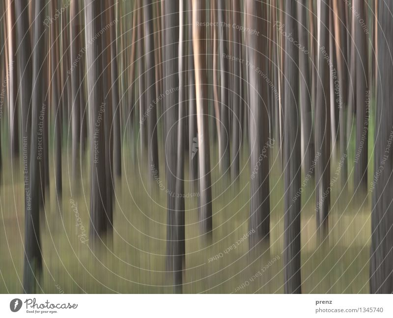 Forest blurred Environment Nature Landscape Plant Autumn Beautiful weather Thin Brown Green Pine Tree trunk Colour photo Exterior shot Experimental Deserted Day