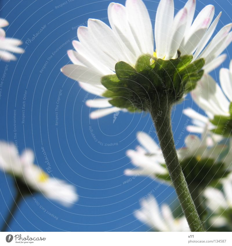 Sky Blue White Summer Flower Calm Meadow Warmth Grass Spring Blossom Weather Beautiful weather Physics Stalk Seasons