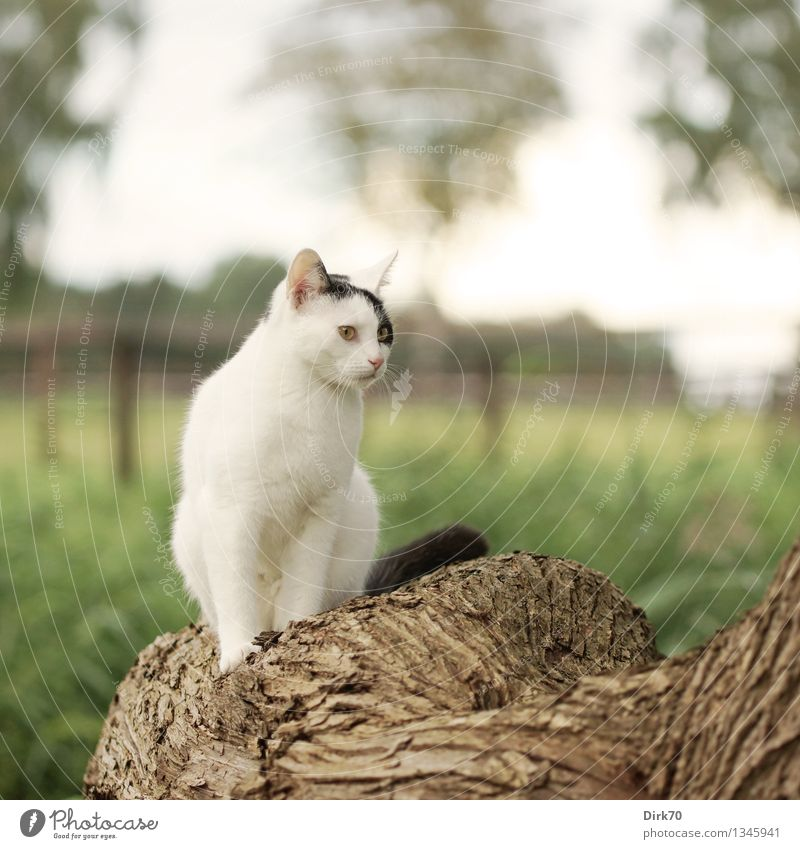 Posing for the photographer Nature Summer Beautiful weather Tree Grass Leaf Tree trunk Tree bark Willow-tree Meadow Field Pasture Pasture fence Animal Pet Cat 1