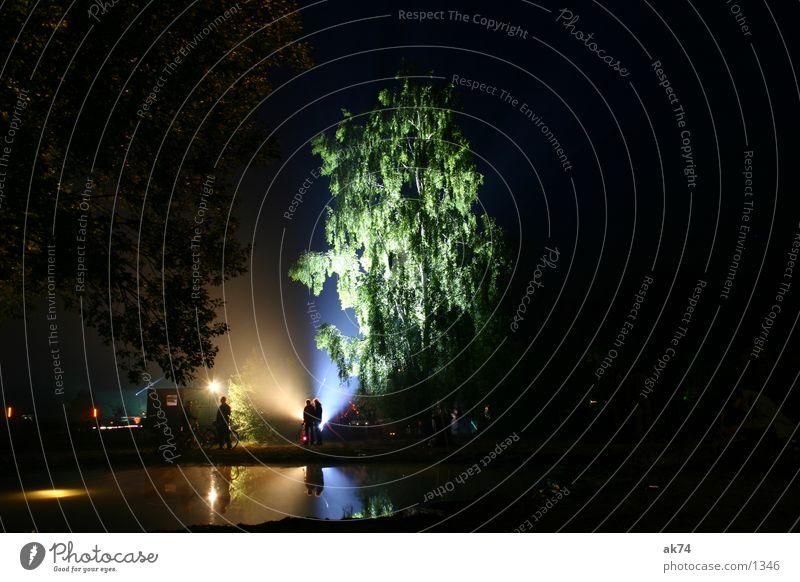 Tree Dark Leisure and hobbies Music festival Birch tree Fusion
