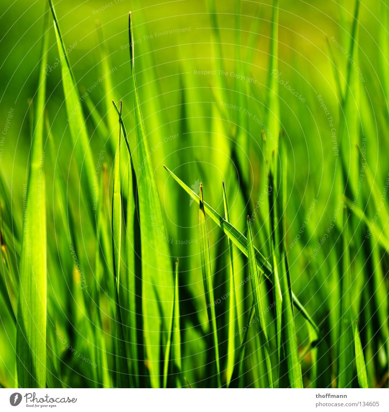 Spring's perspective Grass Green Summer Macro (Extreme close-up) Blade of grass Plant Meadow Close-up Shadow Point Pasture Mow the lawn