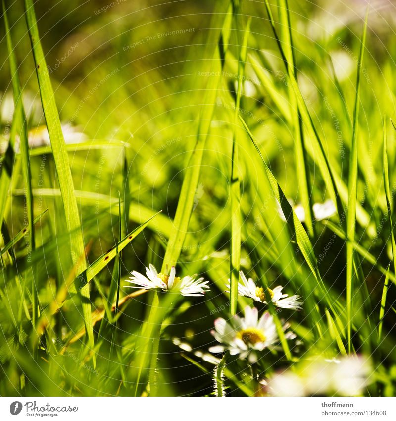 Green Plant Summer Flower Meadow Blossom Grass Spring Weather Bouquet Daisy Garden Bed (Horticulture) Blur