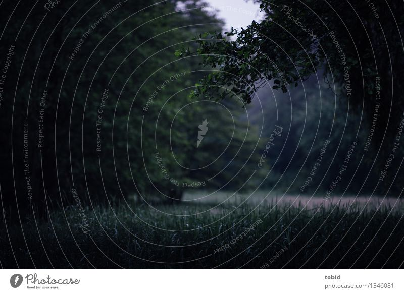Spreedorado Silence. Nature Landscape Plant Fog Tree Grass Meadow Forest Dark Cold Loneliness Mystic Clearing Subdued colour Exterior shot Deserted Evening