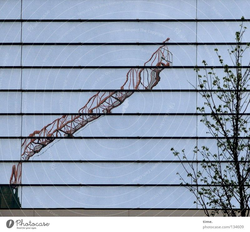 Building crane, functional (II) Crane Construction crane Reflection Tree Branchage Alcohol-fueled Work and employment Eye-catcher Unclear Physics Craft (trade)