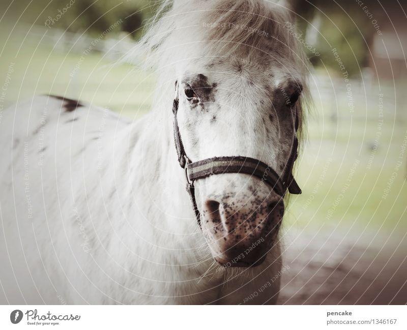 Dream of the pony farm. Meadow Animal Horse 1 Emotions Happy Joie de vivre (Vitality) Adventure Joy Friendship Pony Farm Gray (horse) Life Ease Pasture