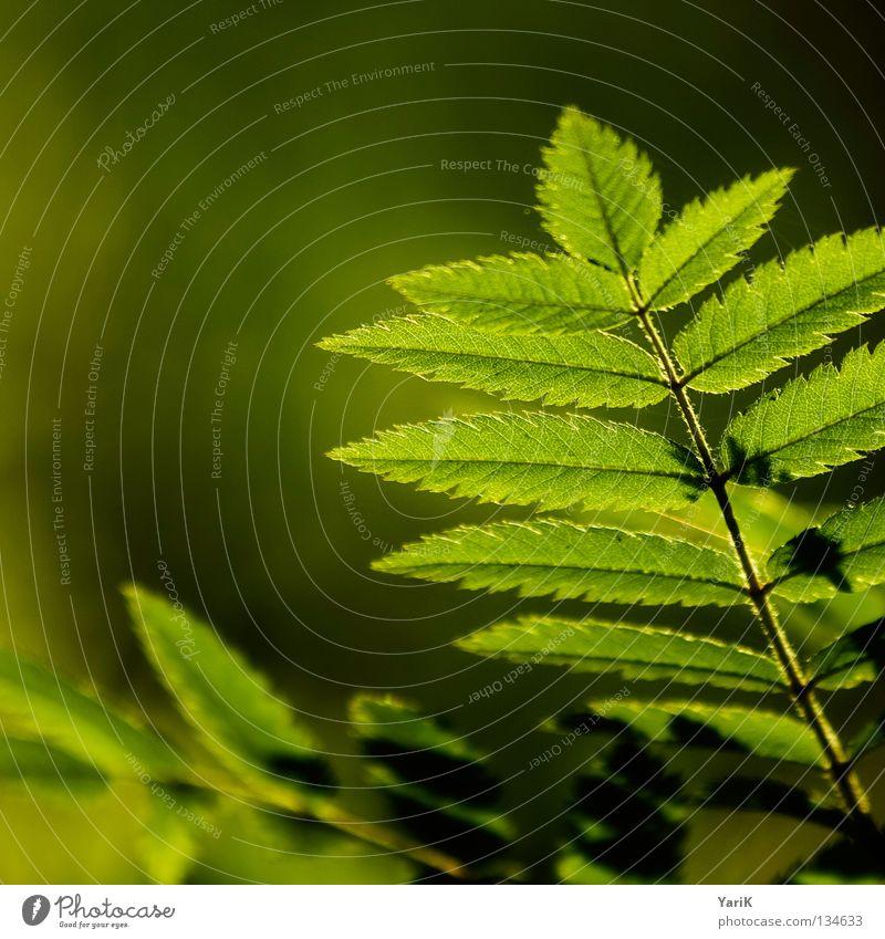 Green Tree Summer Warmth Spring Lighting Fresh Hope Desire Branch Physics Illuminate Square Twig Pteridopsida Format