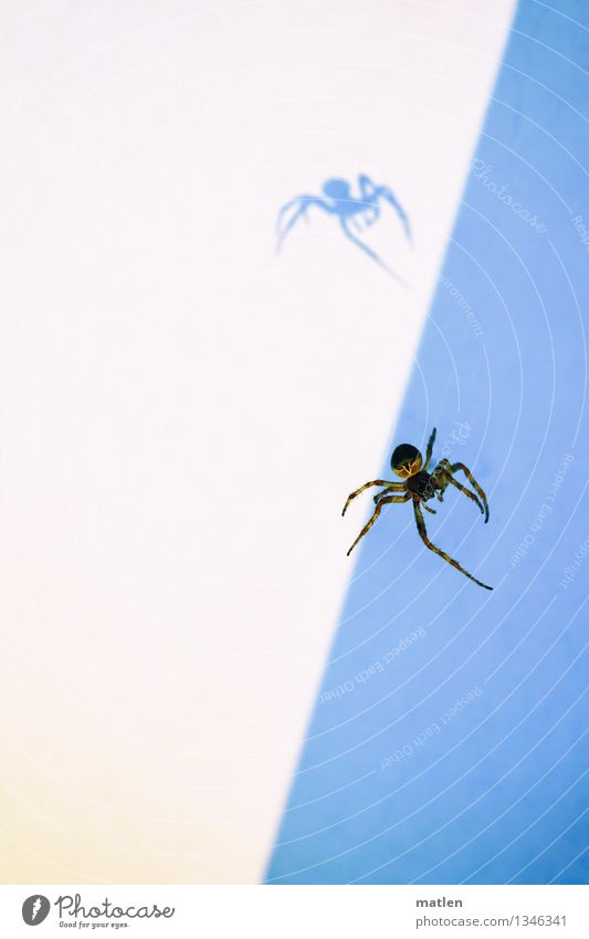 Shadows of themselves Animal Spider 1 Creepy Blue Brown White Crazy Colour photo Subdued colour Exterior shot Close-up Deserted Copy Space left Copy Space right