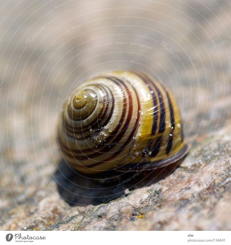 gastropoda Snail Spiral Bobbin Snail shell Slowly Macro (Extreme close-up) Close-up Mollusk Bowl