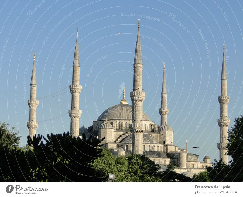 The Blue Mosque Far-off places Sightseeing City trip Summer Summer vacation Architecture Cloudless sky Istanbul Turkey Port City Downtown Old town Skyline