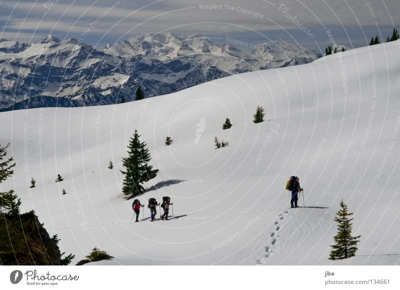 Nature Vacation & Travel Snow Mountain Hiking Multiple Sports team Alps Vantage point Fir tree Winter sports In transit Alpine pasture Wilderness Untouched