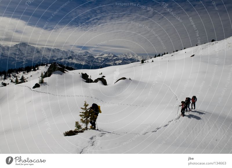Nature Vacation & Travel Snow Mountain Hiking Multiple Sports team Alps Vantage point Fir tree In transit Alpine pasture Wilderness Canton Bern Snow shoes