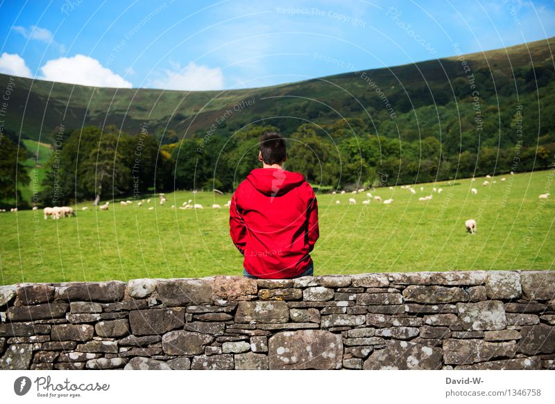 Human being Nature Vacation & Travel Youth (Young adults) Man Green Relaxation Young man Calm 18 - 30 years Adults Life Meadow Wall (barrier) Freedom Masculine