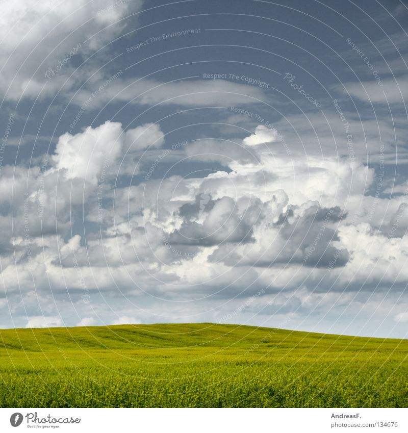 Sky Nature Summer Clouds Landscape Yellow Spring Blossom Field Energy industry Beautiful weather Blossoming Agriculture Organic produce Ecological Agriculture