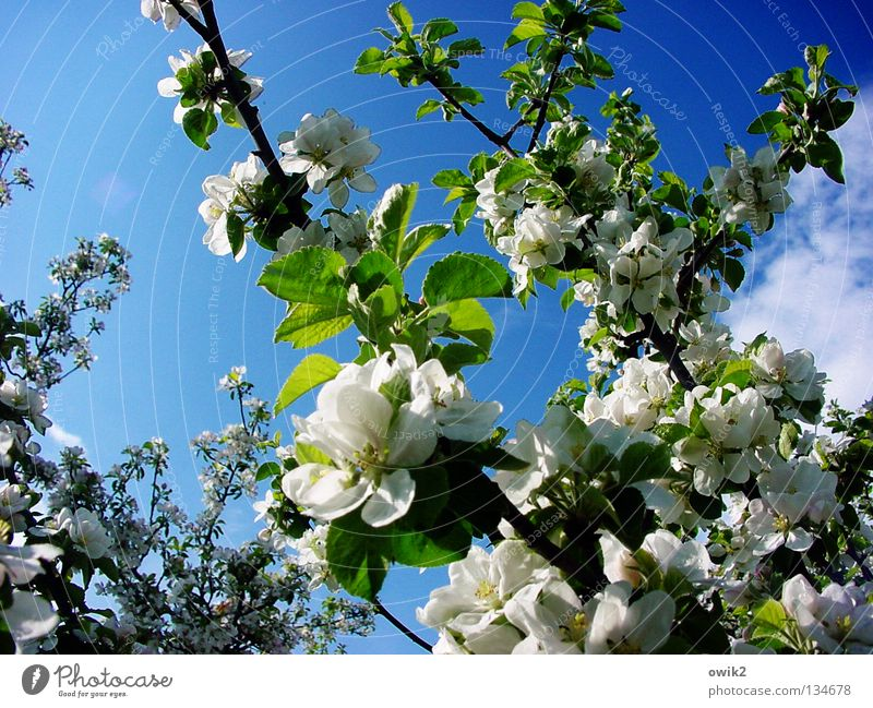 restart Fruit Fragrance Vacation & Travel Nature Plant Air Spring Flower Bee Wood Blossoming Green White Longing Expectation Idyll Apple tree Maturing time