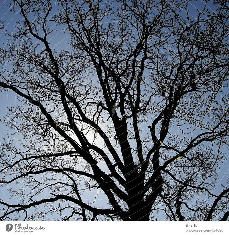 Sky Nature Blue Tree Sun Summer Black Dark Dream Bright Branch Tree trunk Twig Blue sky Branchage Shadow play