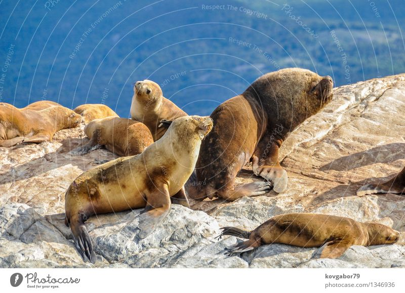 Sea lion family on a rock, Beagle Channel, Argentina Sky Nature Vacation & Travel Ocean Loneliness Landscape Clouds Mountain Coast Tourism Trip
