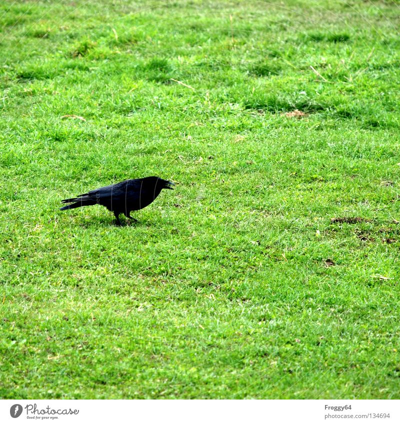 Flower Green Black Animal Meadow Grass Spring Bird Going Walking Flying River Feather Zoo Brook Beak