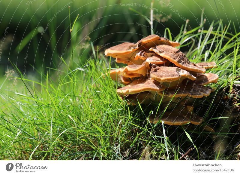 happy mushrooms... Nature Plant Autumn Beautiful weather Grass Mushroom Tree fungus Blade of grass Growth Happiness Natural Brown Green Black Moody Discover