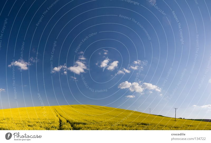 Sky Clouds Yellow Spring Freedom Field Large Horizon Electricity Stripe Stalk Blossoming Americas Bavaria Beautiful weather Electricity pylon
