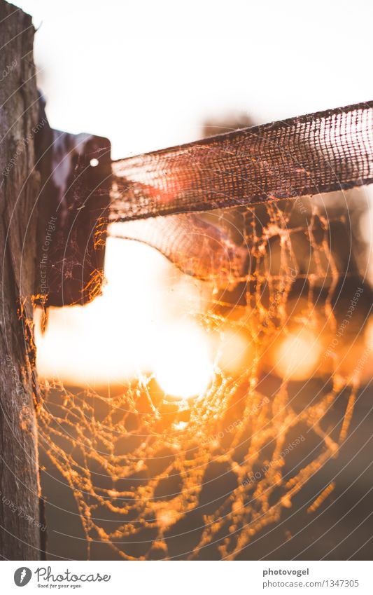 Nature Summer Sun Calm Warmth Moody Bright Glittering Orange Illuminate Energy Warm-heartedness Beautiful weather Net Spider
