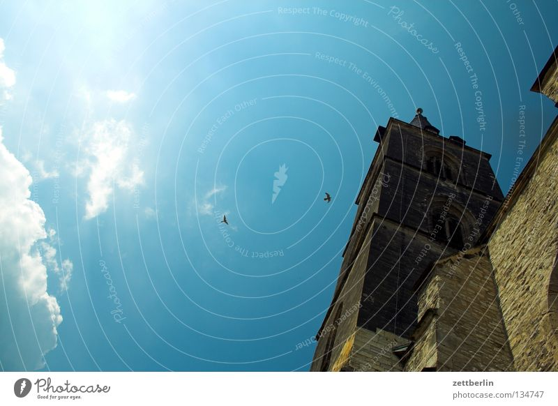 kestrel Church spire Gothic period Bell Christianity Occident Religion and faith Belief Worm's-eye view Steep Bird Falcon Clouds Saxony-Anhalt House of worship