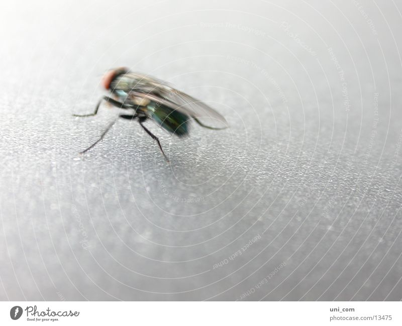 smart fly Insect Blur Fly Wing Movement