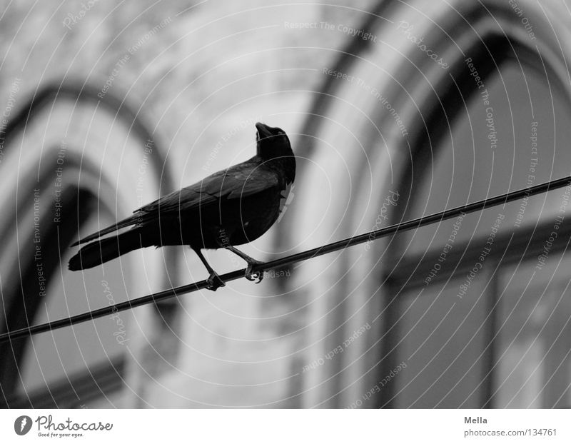 Black Animal Dark Wall (building) Window Gray Wall (barrier) Building Bird Sit Gloomy Cable Observe Mysterious Creepy Historic