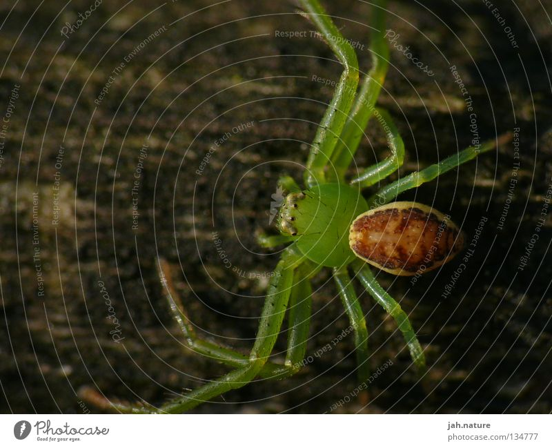 Nature Green Beautiful Hiking Insect Spider Macro (Extreme close-up)