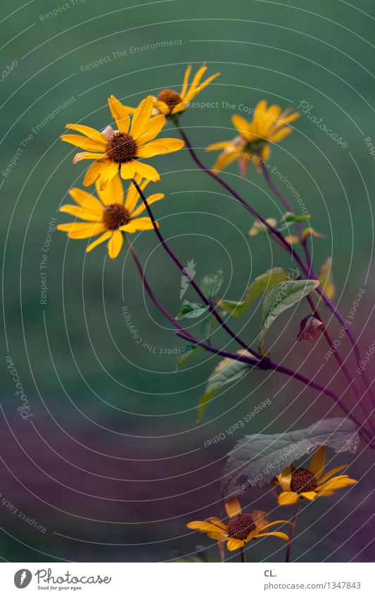 Nature Green Flower Environment Yellow Blossoming Violet