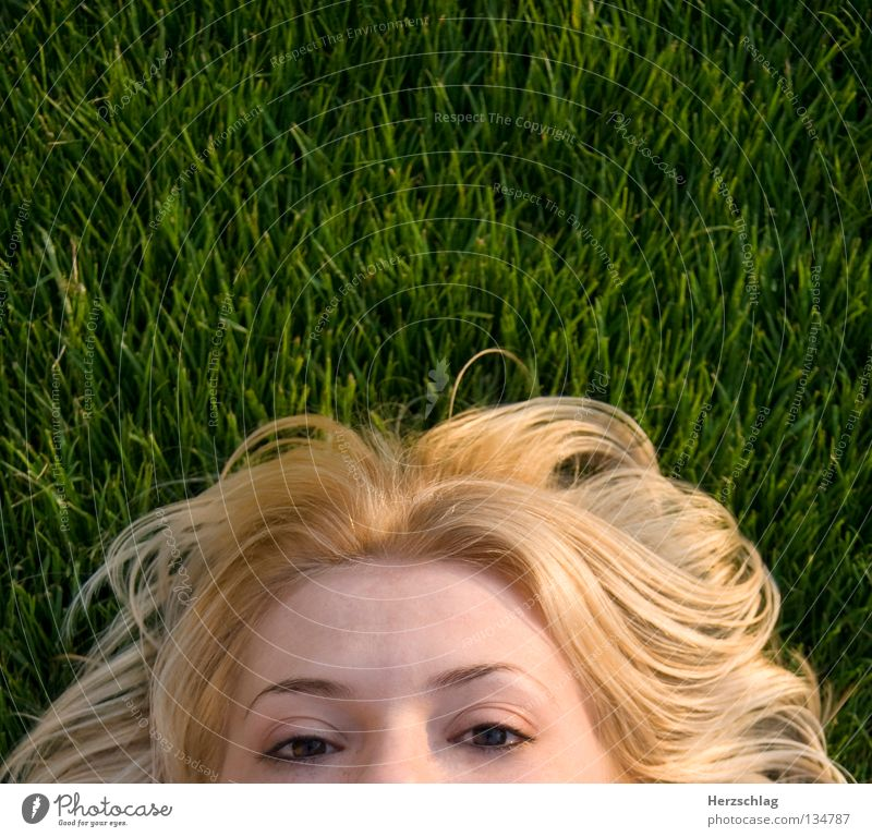 Green Summer Eyes Meadow Grass Hair and hairstyles Bird Skin Blonde Perspective Observe