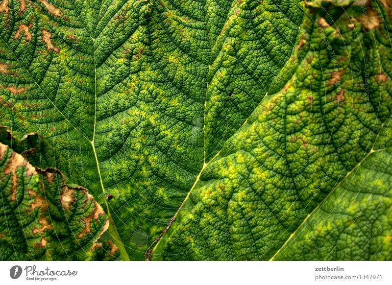 leaf Leaf Plant Leaf green Green Rachis Twig Branched Background picture Limp Summer Botany Exotic Virgin forest Tropical