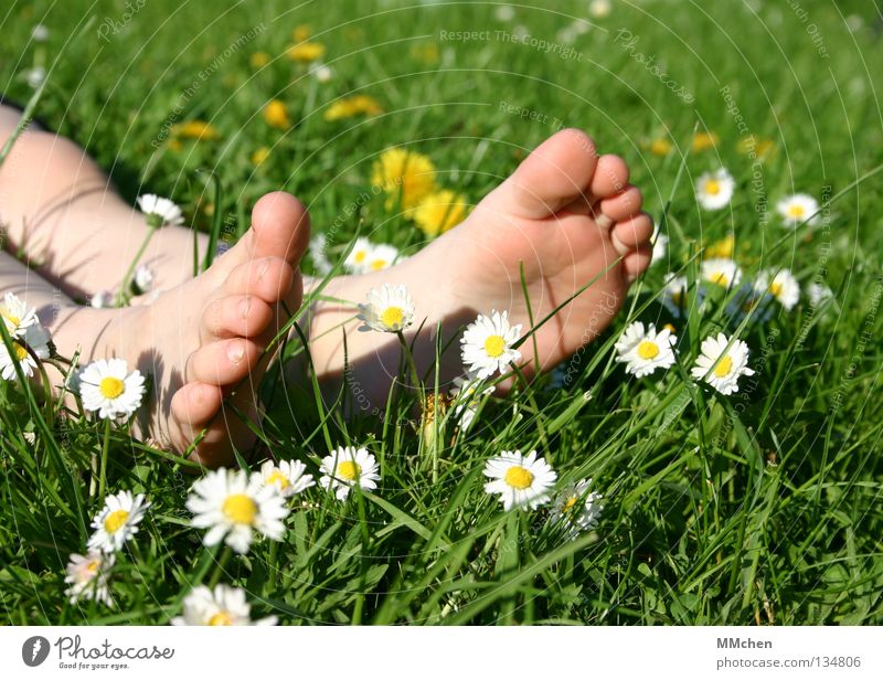 pedicure Grass Meadow Field Multicoloured Summer Flower Daisy Stalk Blade of grass Relaxation Rest Sleep Sunbathing Toes Sole of the foot Barefoot Wellness
