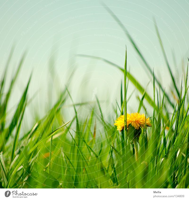 Nature Flower Green Blue Plant Loneliness Yellow Meadow Blossom Grass Spring Happy Environment Perspective Happiness Growth
