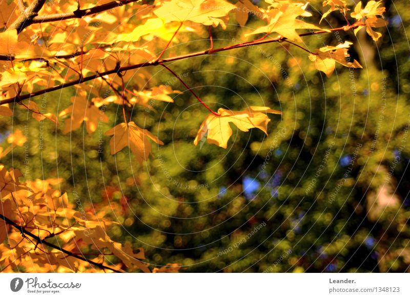 Nature Green Sun Tree Leaf Calm Forest Environment Yellow Autumn Style Happy Moody Idyll Gold Happiness