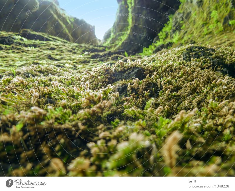 vegetation in Iceland Herbs and spices Nature Plant Moss Leaf Blossom Stone Soft Green detail reason Natural Overgrown Botany flat angle thriving Ground Milled