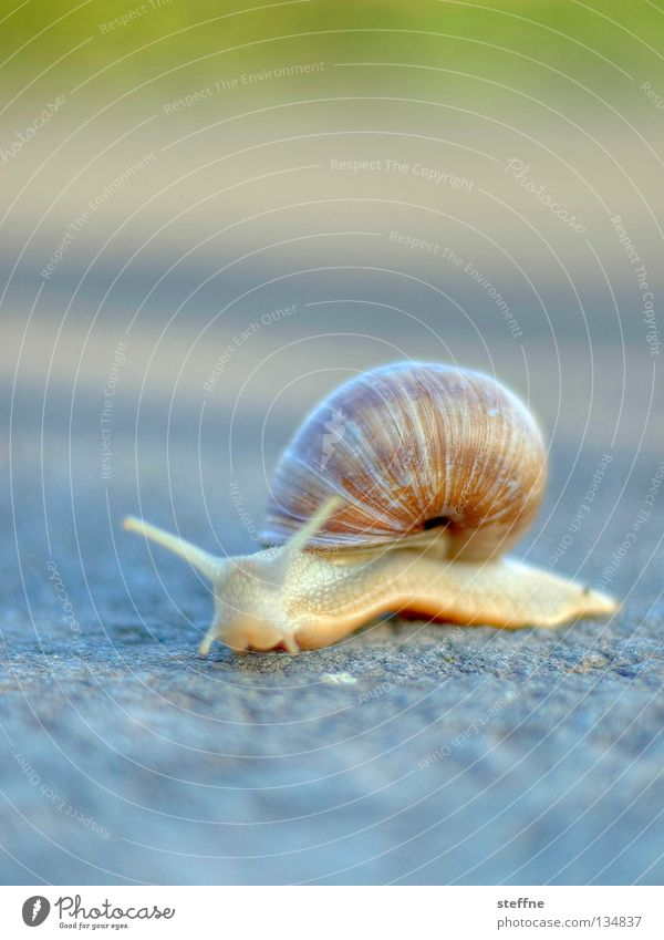 Nature White Movement Lanes & trails Nutrition Gastronomy France Snail Crawl Feeler Slowly Slimy Snail shell French Mucus Vineyard snail