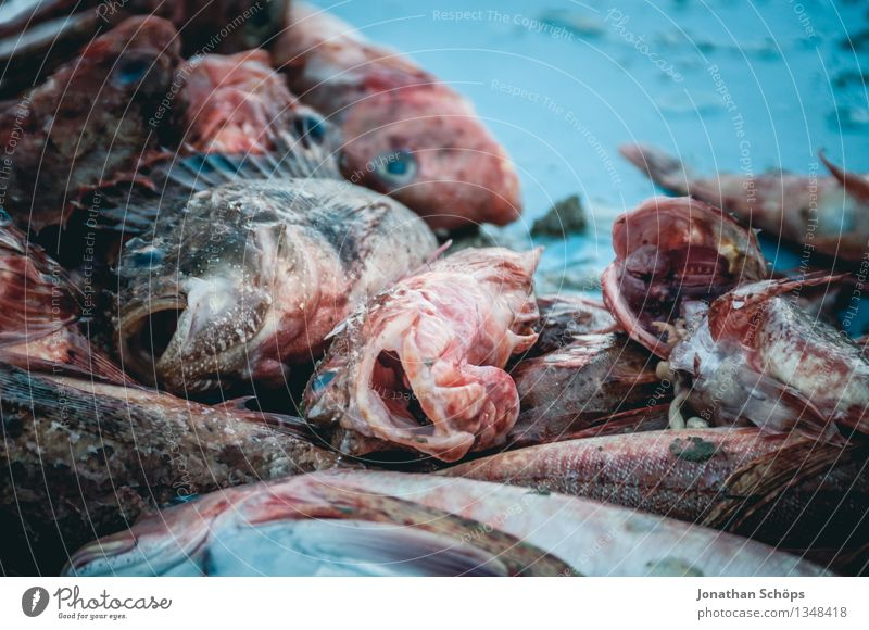 Blue Ocean Animal Dish Food photograph Environment Death Food Group of animals Fish Fish Harbour Pain Markets Narrow Marketplace