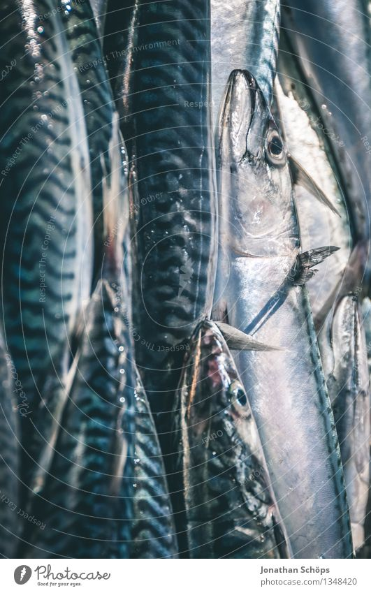 Blue Ocean Animal Environment Eating Death Food To enjoy Group of animals Fish Delicious Markets Narrow Fishery Marketplace