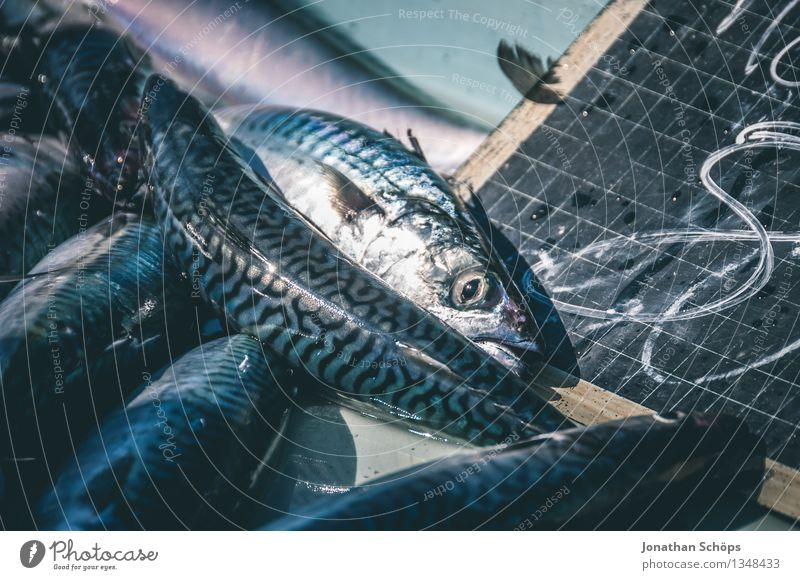 Blue Healthy Eating Ocean Animal Dish Food photograph Environment Death Food To enjoy Group of animals Fish Fish Delicious Harbour Pain