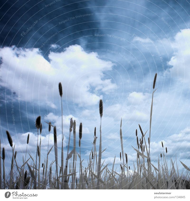 Sky Nature Blue White Tree Clouds Black Calm Far-off places Dark Meadow Grass Freedom Lawn Infinity
