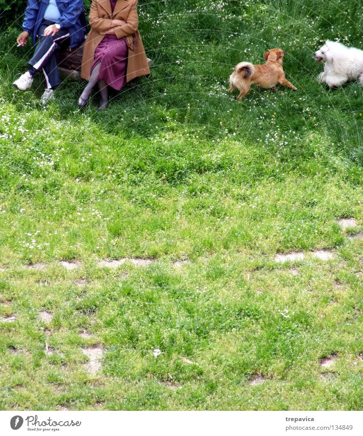 Woman Man Old Green Joy Animal Relaxation Meadow Dog Playing Senior citizen Grass Spring Couple Friendship 2